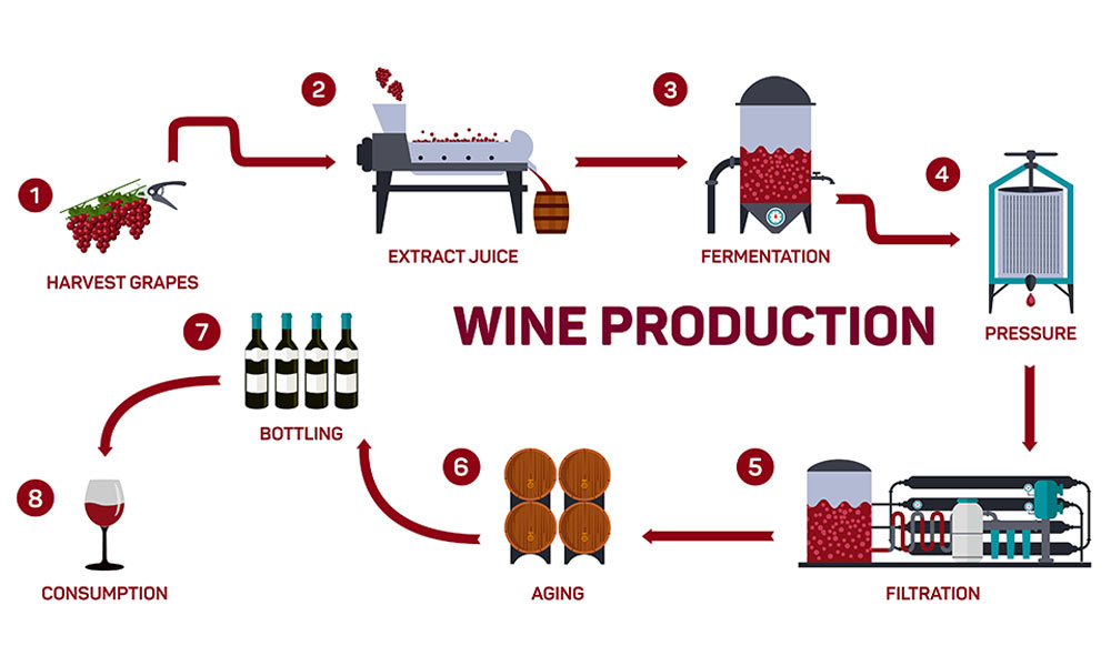 Wine-production-diagram